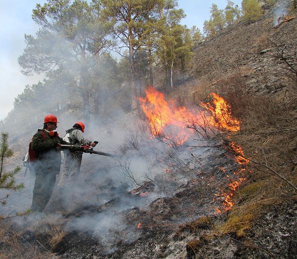 Бланк акт о лесном пожаре